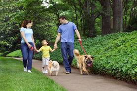 family walking their dogs