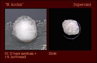 superoxol