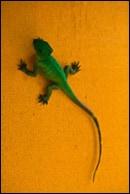 Foto: Reptil