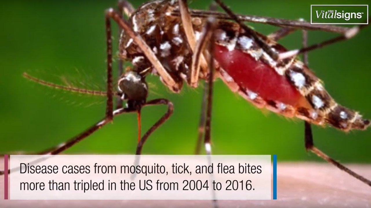 Illnesses on the Rise from Mosquito, Tick, and Flea Bites