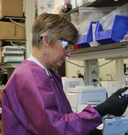 A CDC microbiologist prepares for the development of the Zika MAC-ELISA test. Like the Trioplex, the MAC-ELISA was developed by CDC for the Zika response.