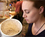 In this CDC photo, a laboratory technician looks into a sealed container of mosquitoes scheduled to undergo testing. In New Orleans, local experts collect mosquitoes for virus testing as part of a citywide mosquito surveillance program.