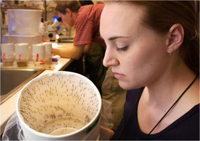 In New Orleans, local experts collect mosquitoes for virus testing as part of a citywide mosquito surveillance program.