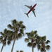 Photo: Airplane flying over palm trees