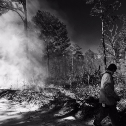 Prescribed burn at the Joseph W. Jones Ecological Research Center