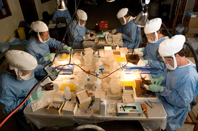 CDC scientists in protective gear, seated around a table full of supplies, studying bats.