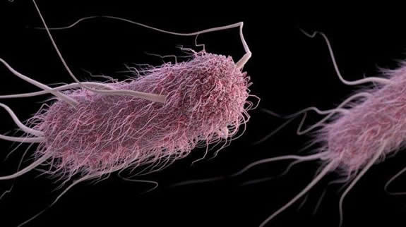 3D rendering of e. coli with spindly protrusions coming from a pink furry capsule shape