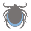 icon of tick