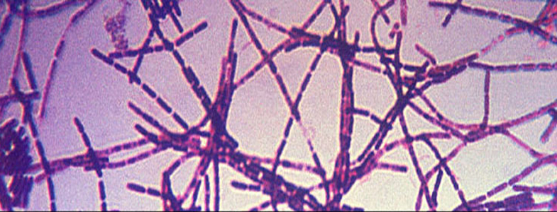 anthrax images #9