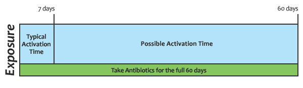 timeline graphic to illustrate that anthrax spores can activate up to 60 days after exposure