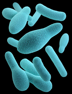 This illustration depicts a three-dimensional (3D) computer-generated image of a group of anaerobic, spore-forming, Clostridium sp. organisms.
