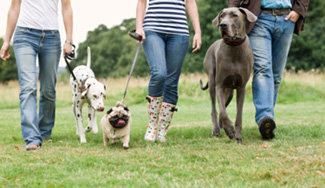 group of people walking dogs