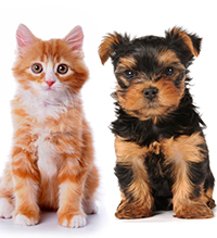 Cute kitten and puppy on a white background