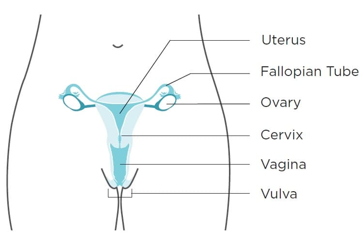 Reproductive graphic
