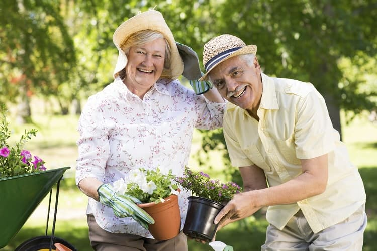 Photo of a senior couple gardening