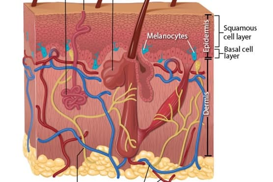 Basal cell carcinoma begins in the basal cell layer of the skin. Squamous cell carcinoma begins in the squamous layer of the skin. Melanoma begins in the melanocytes, which are the cells that make melanin, the pigment that gives skin its color.