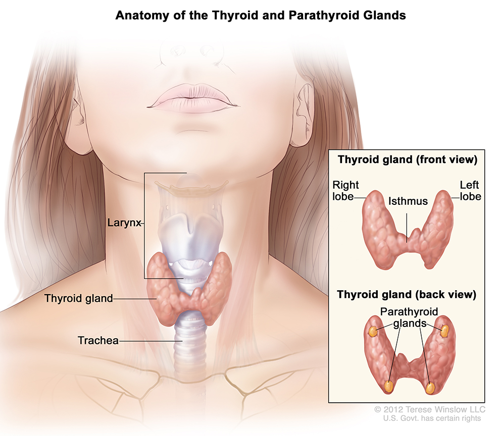 cdc - thyroid cancer