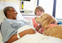 dog therapy in hospital with patient and handler