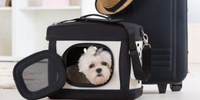 Picture of dog in carrying case, sitting next to a suitcase