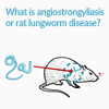 Rat lungworm diseases