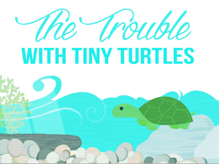 Trouble with tiny turtles
