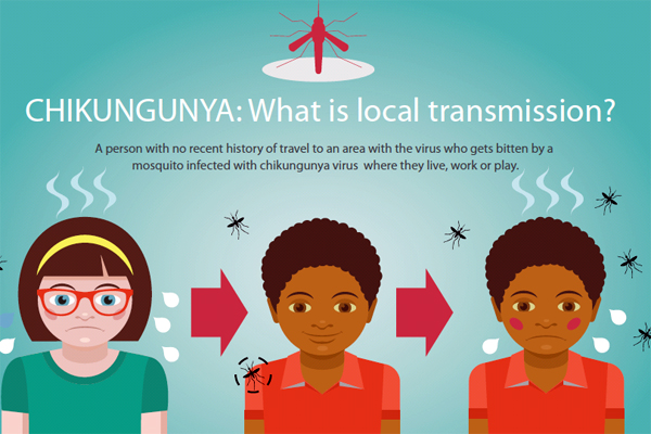 Infographic: CHIKUNGUNYA: What is local transmission?