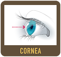 Diagram of an eye cornea