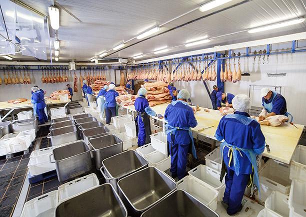 도살장에서 고기를 자르고 있습니다. 육류 제조 시설에서 돼지고기를 자르고 있는 도축업자