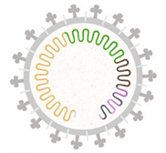 image of a genome envelope