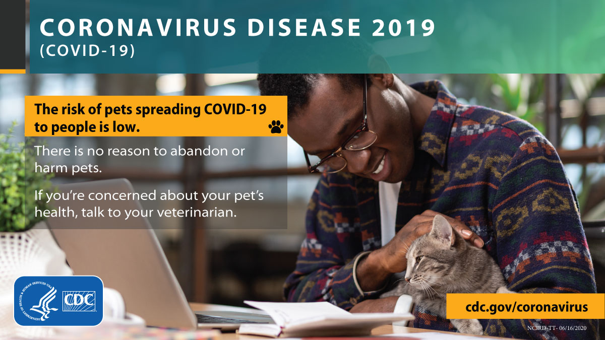 The risk of pets spreading COVID-19 to people is low