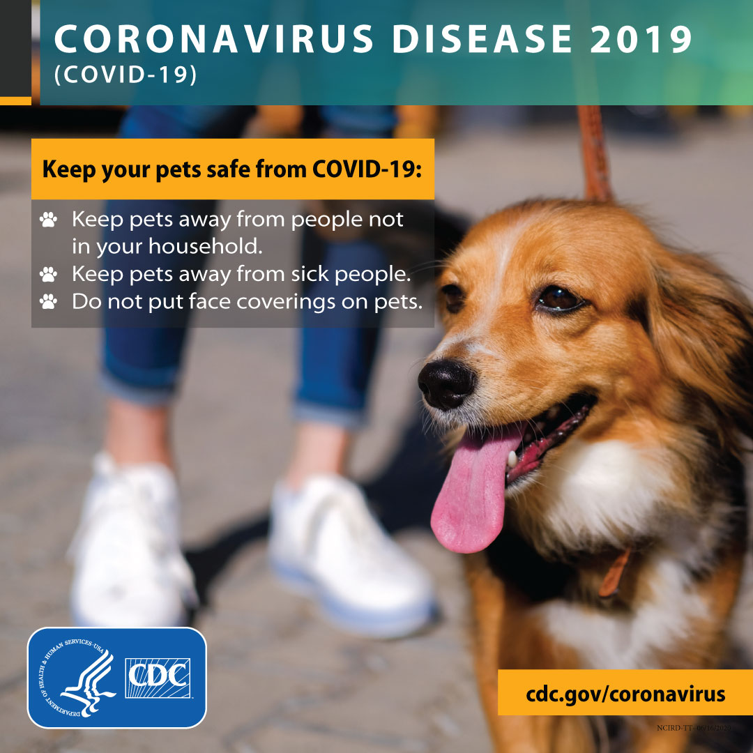 Keep your pets safe from COVID-19