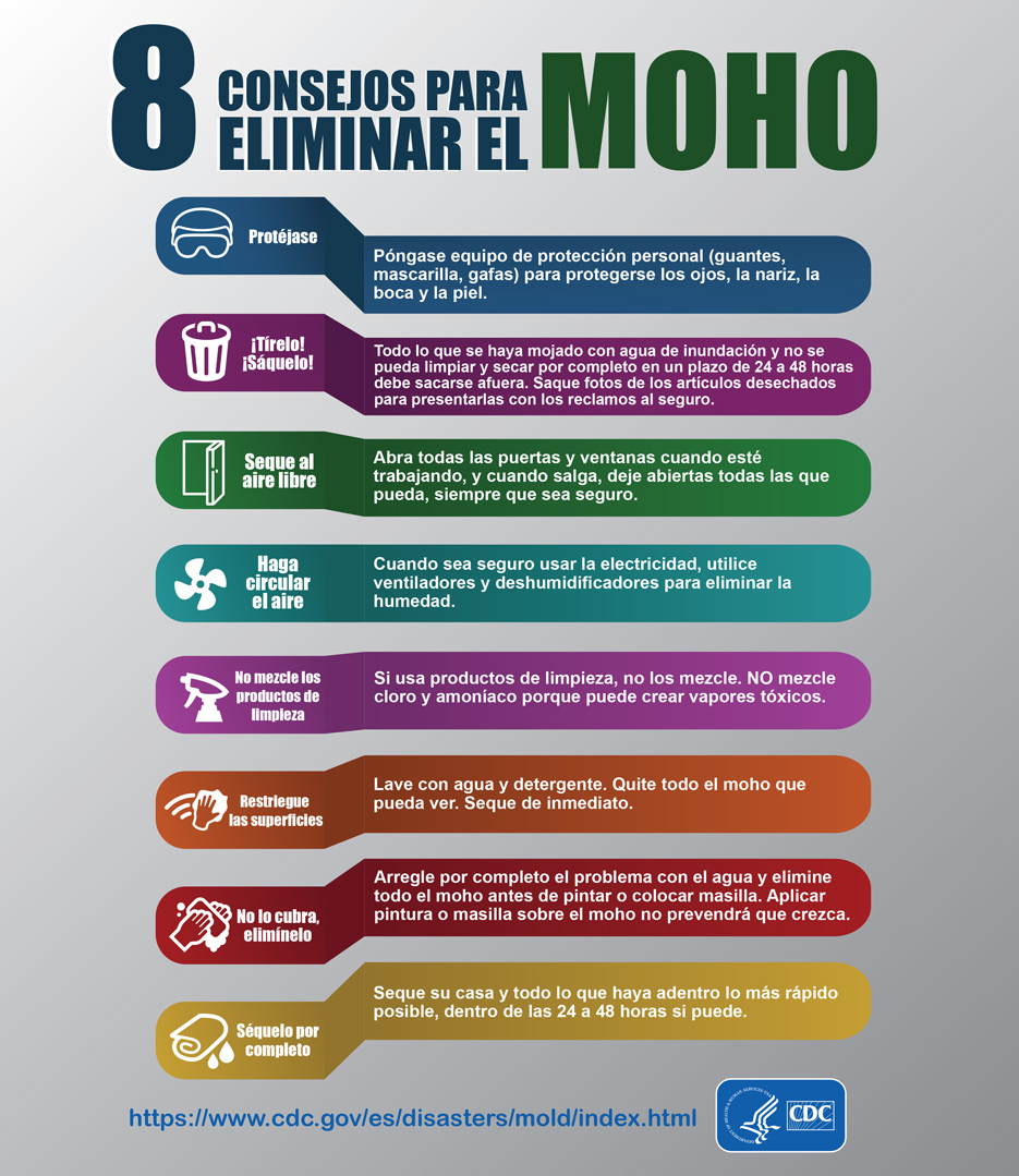 Mold Infographic - Spanish