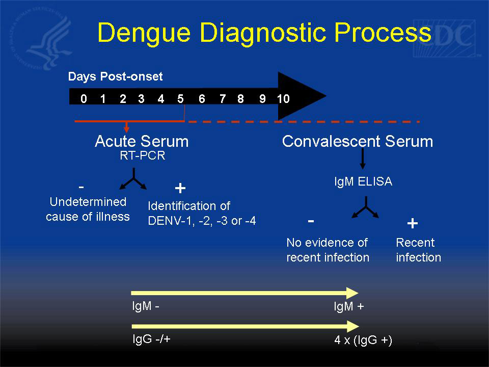 Dengue Diagnostic Process