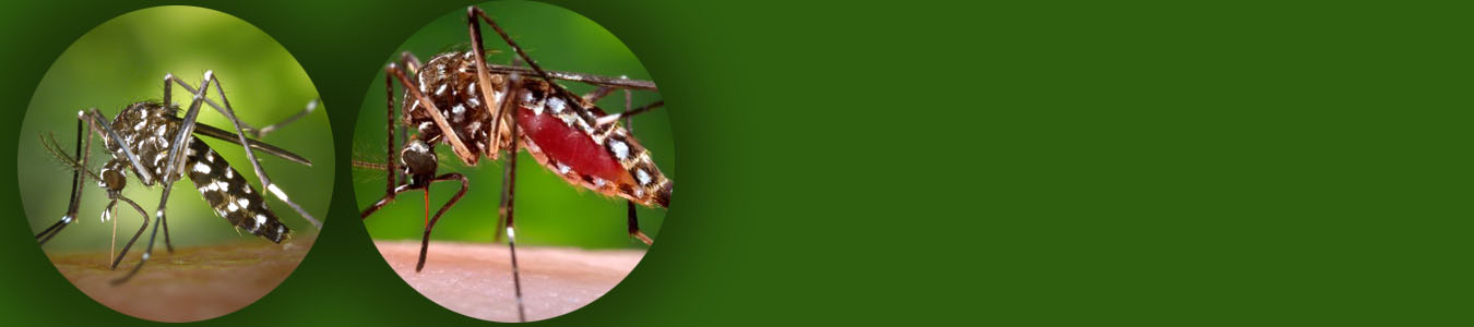 Green banner with images of mosquitoes feeding on host