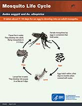thumbnail of pdf: Mosquito Life Cycle