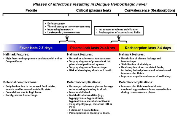 Phases of infections resulting in dengue hemorrhagic fever