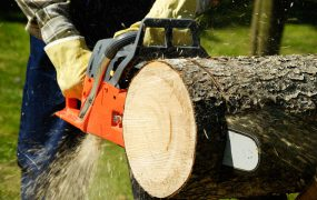 A picture of a person with a chain saw cutting a fallen tree into pieces