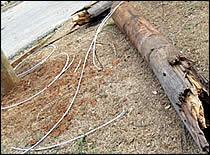 Trozo de un árbol caído sobre cables de electricidad