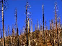A picture of an area burned by wildfire which is vulnerable to landslides and debris flows