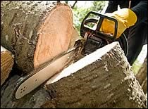 chainsaw slicing a fallen tree