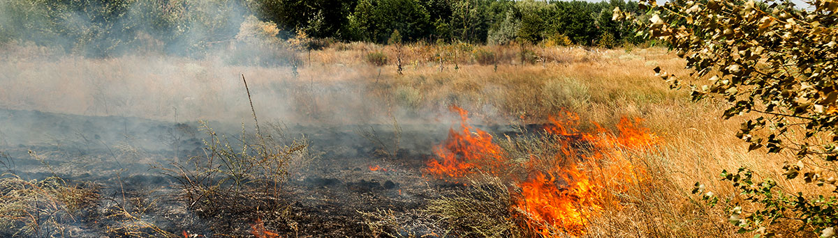 Dry grass and brush burning in a wildfire.