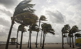 Heavy winds blow palm trees on a beach with large waves and stormy skies.