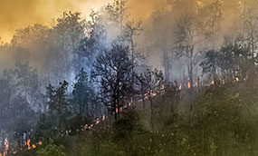 A line of fire spreads up the side of a tree covered mountain.