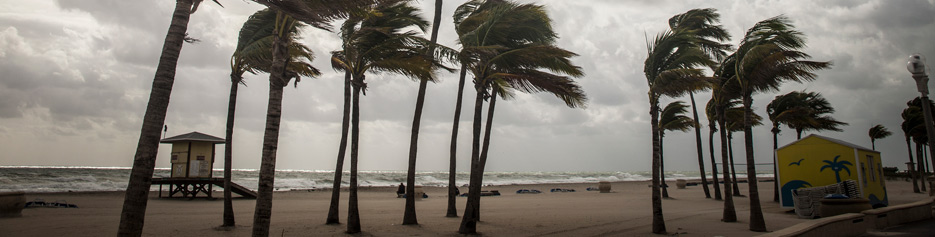 Palm trees bending in the wind on a beach
