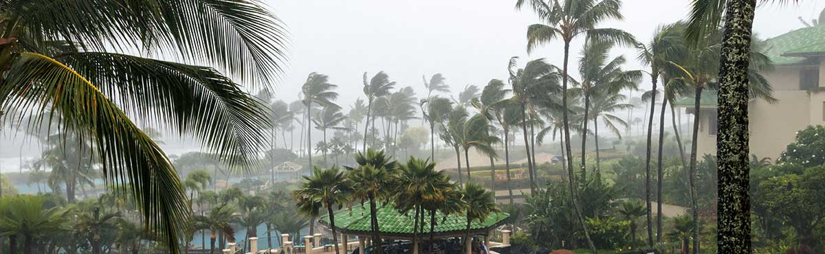 Palm trees blowing from the hurricane-force winds.