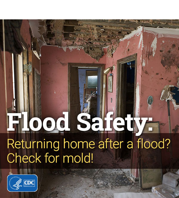 Flood Safety: Returning home after a flood? Check for mold!