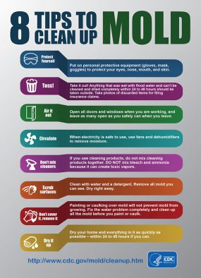8 Tips To Cleanup Mold