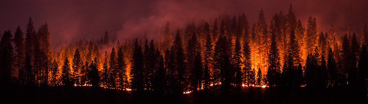 Active wildfire burning trees in a mountain forest.