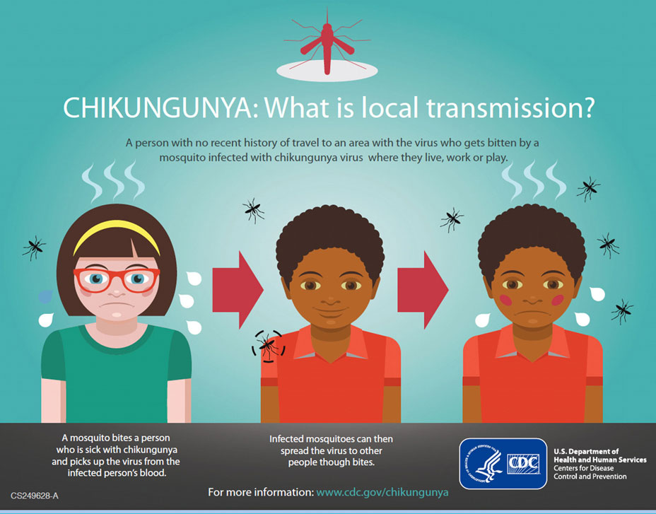 chikungunya is a disease that is Special edition on infectious disease  chikungunya virus, carried by  mosquitoes, infects humans, primates, rodents, and birds with no.