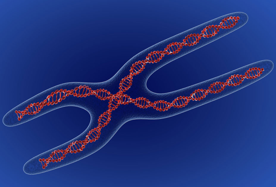 DNA illustration of Fragile X syndrome